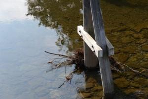 宇治橋から望む木除杭