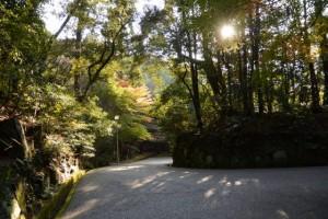神宮司廳前から大山祗神社、子安神社方向の遠望