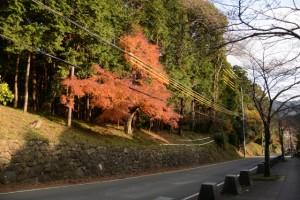 牛谷坂の紅葉