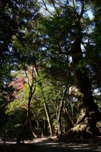 上御井神社(豊受大神宮所管社)遙拝(外宮)
