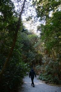 多賀宮への石階下から下御井神社へと続く参道(外宮)