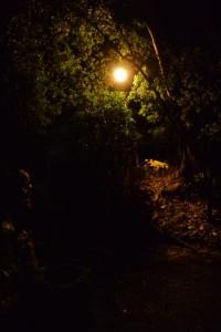 草奈伎神社の夜間照明(豊受大神宮摂社)