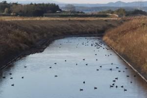 塩入川(弁天橋の上流側)