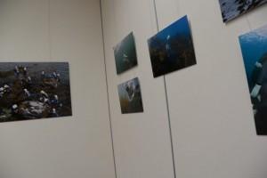 写真展「海人写真家 古谷千佳子が撮った志摩半島の海女」(志摩市歴史民俗資料館)