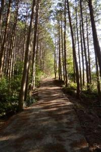 山田新池への急な坂道(玉城町山神)