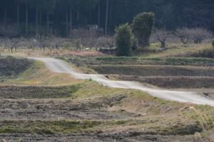 県道421号から遠望した農道