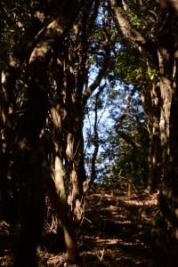 野見坂西峰へ(道方山への尾根道)