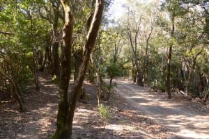 林道と接する道方山への尾根道
