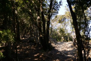 林道と離れる道方山への尾根道