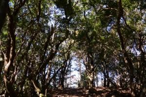 道方山東峰〜道方山(道方山への尾根道)