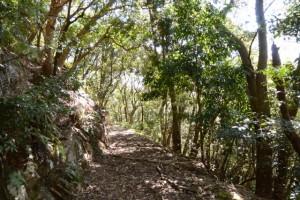 尾根道から何とか下山した場所(野見坂隧道の南側付近)