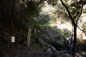昇龍の滝付近