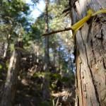 昇龍の滝付近から道方山へと続く林道へ