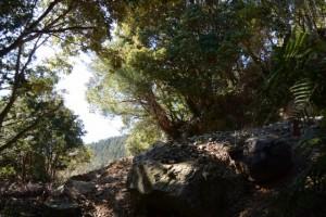 昇龍の滝付近からの山道と合流する道方山へと続く林道