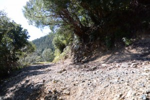 昇龍の滝付近からの山道と合流した林道(能見坂峠方向)