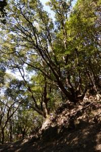 道方山登り口(能見坂峠)の道標付近