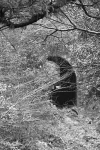 朝熊登山鉄道・ケーブルカー跡のトンネル遠望