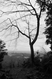 朝熊岳道から望む伊勢の風景