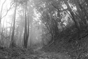 朝熊岳道にて