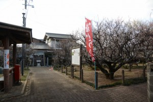 「梅まつり 臥龍梅保存会」の幟が立てられた新開臥竜梅公園