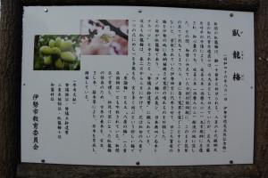 臥龍梅(がりゅうばい)の説明板(新開臥竜梅公園)