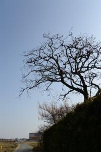 自宅〜河原神社(豊受大神宮 摂社)