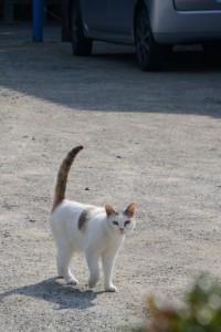 神社港公民館前で猫と対峙するの図