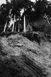 林道 高狭ケ野線の風景
