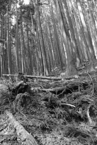 長野城跡付近の湧水場(?)