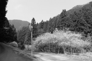 林道 瀬戸線(瀬戸林道)への分岐付近(津市美里町桂畑)