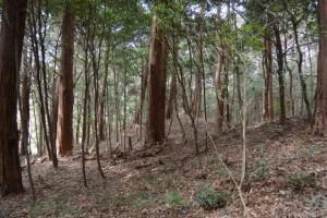 棒原神社(皇大神宮 摂社)の社域に残されている古墳群