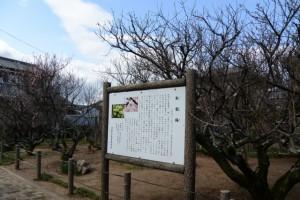 臥竜梅公園(伊勢市御薗町新開)