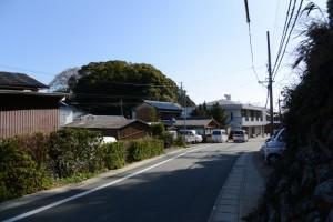 満留山神社の社叢遠望(鳥羽市安楽島町)