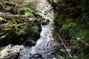岩瀧神社の前を流れる毛作川(大紀町滝原)