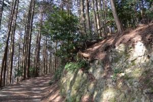 坂本棚田〜ミツマタの森(亀山市安坂山町)