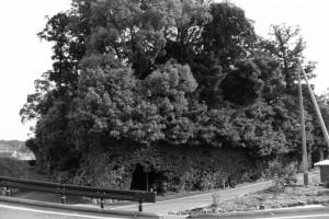 大土御祖神社(皇大神宮 摂社)ほかの社叢