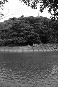 鏡宮神社の虎石付近から朝熊川越しに望む朝熊神社の社叢