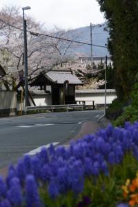 宮崎お花畑から望んだ国史跡旧豊宮崎文庫の門