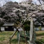 オヤネザクラ付近(国史跡旧豊宮崎文庫)