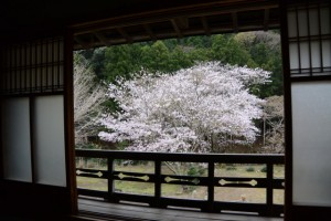 木間々な美術館から望む横輪桜(伊勢市横輪町)