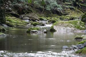 頓登川、御手洗場の上流方向(瀧原宮)