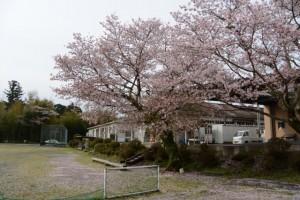 旧滝原小学校の桜(大紀町)