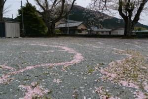 桜の花弁でできた風紋(旧阿曽小学校)