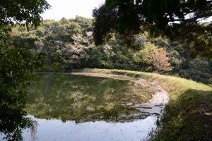 本殿の裏手にある池、さよが池?(明神社)