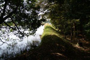 本殿の右手にある池、さよが池?(明神社)
