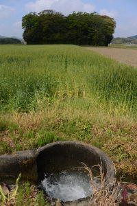 朽羅神社(皇大神宮 摂社)付近を流れる農業用水
