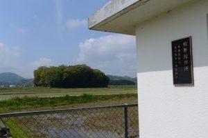 宮川用水土地改良区 蚊野操作所付近から朽羅神社の社叢遠望