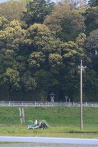 御船神社(皇大神宮 摂社)付近での田植え