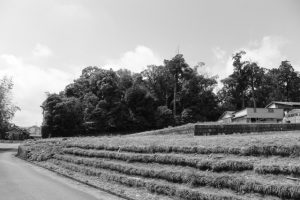 蚊野神社(皇大神宮 摂社)の社叢