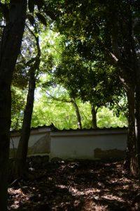 大水神社(皇大神宮 摂社)付近から見上げた旧林崎文庫の緑
